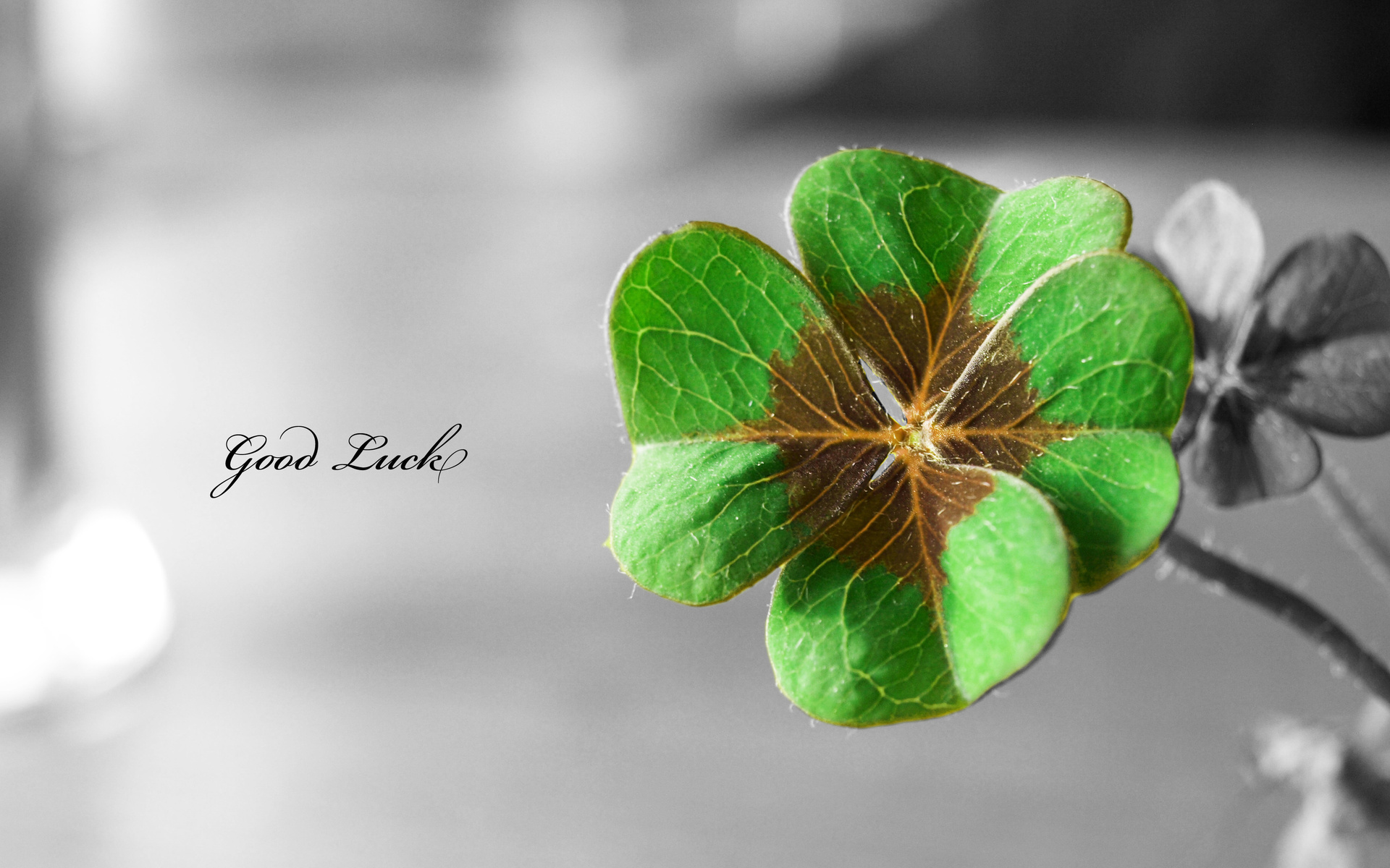 four-leaf-clover_102149.jpg