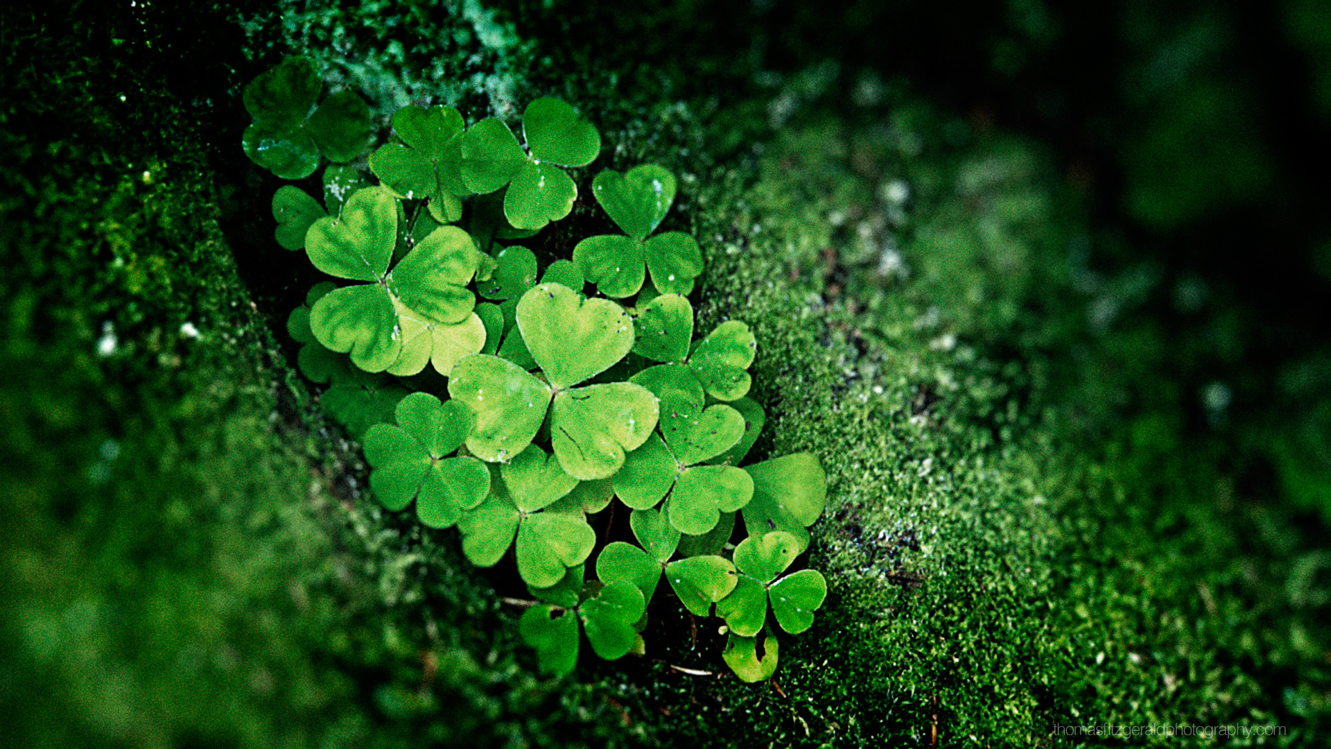 Pics Photos  Shamrock Wallpaper Celtic Hd