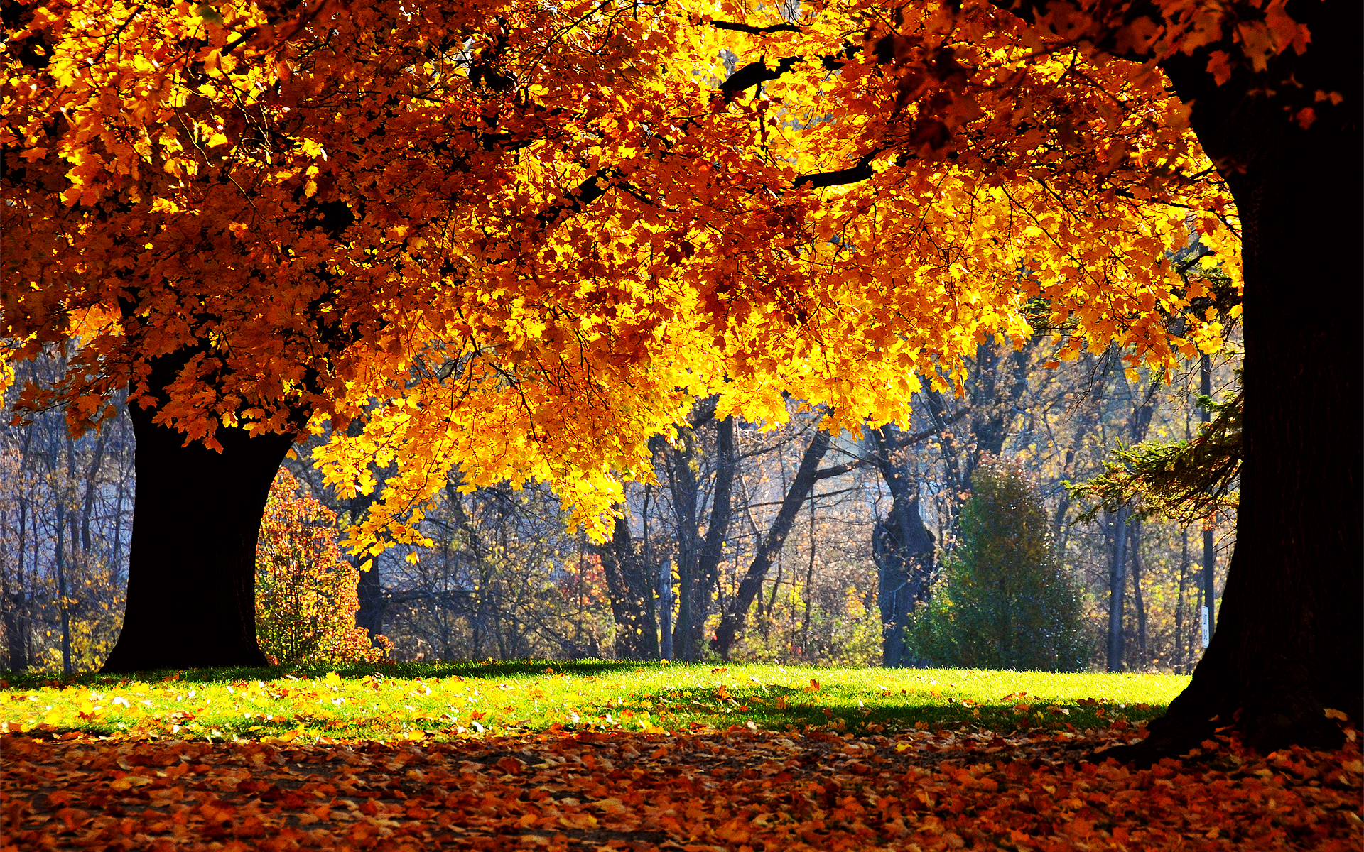 autumn backgrounds wallpaper high definition high quality