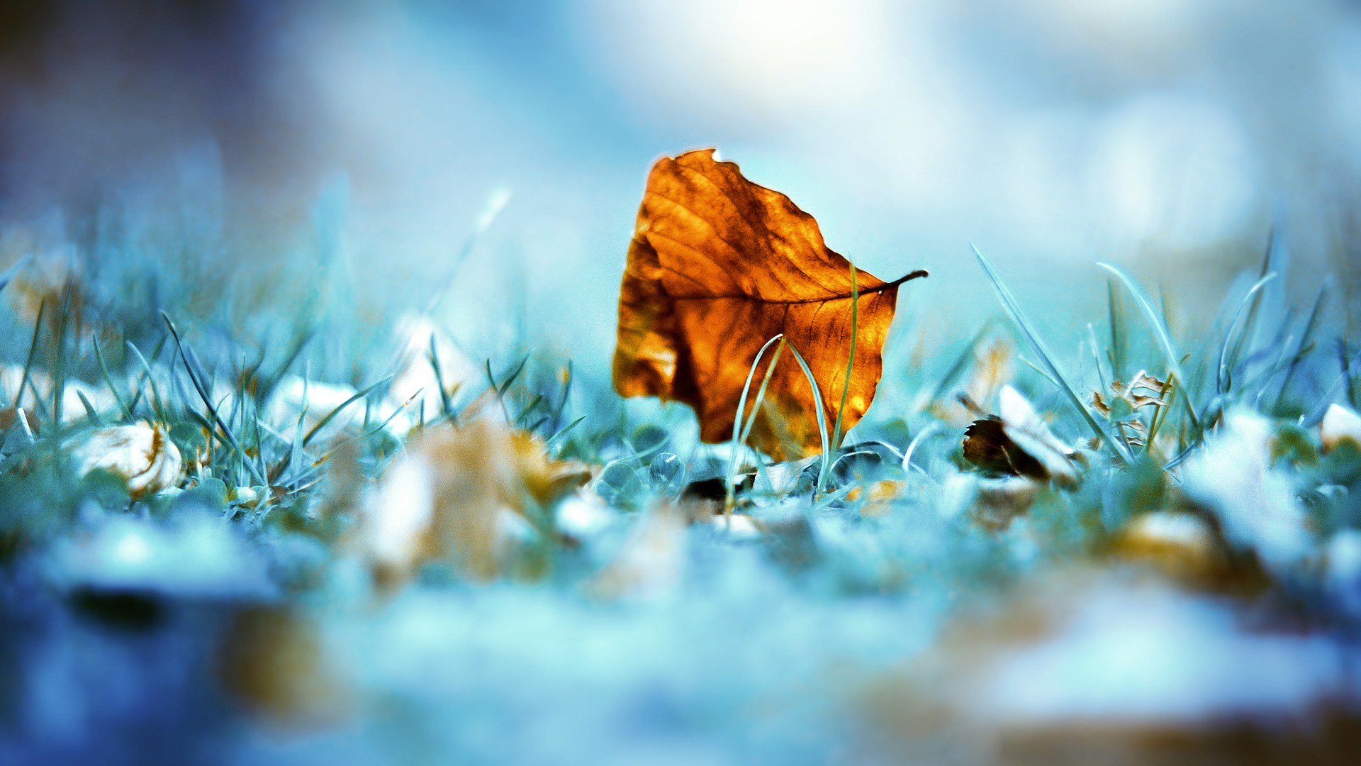 Autumn Leaf Wallpapers...