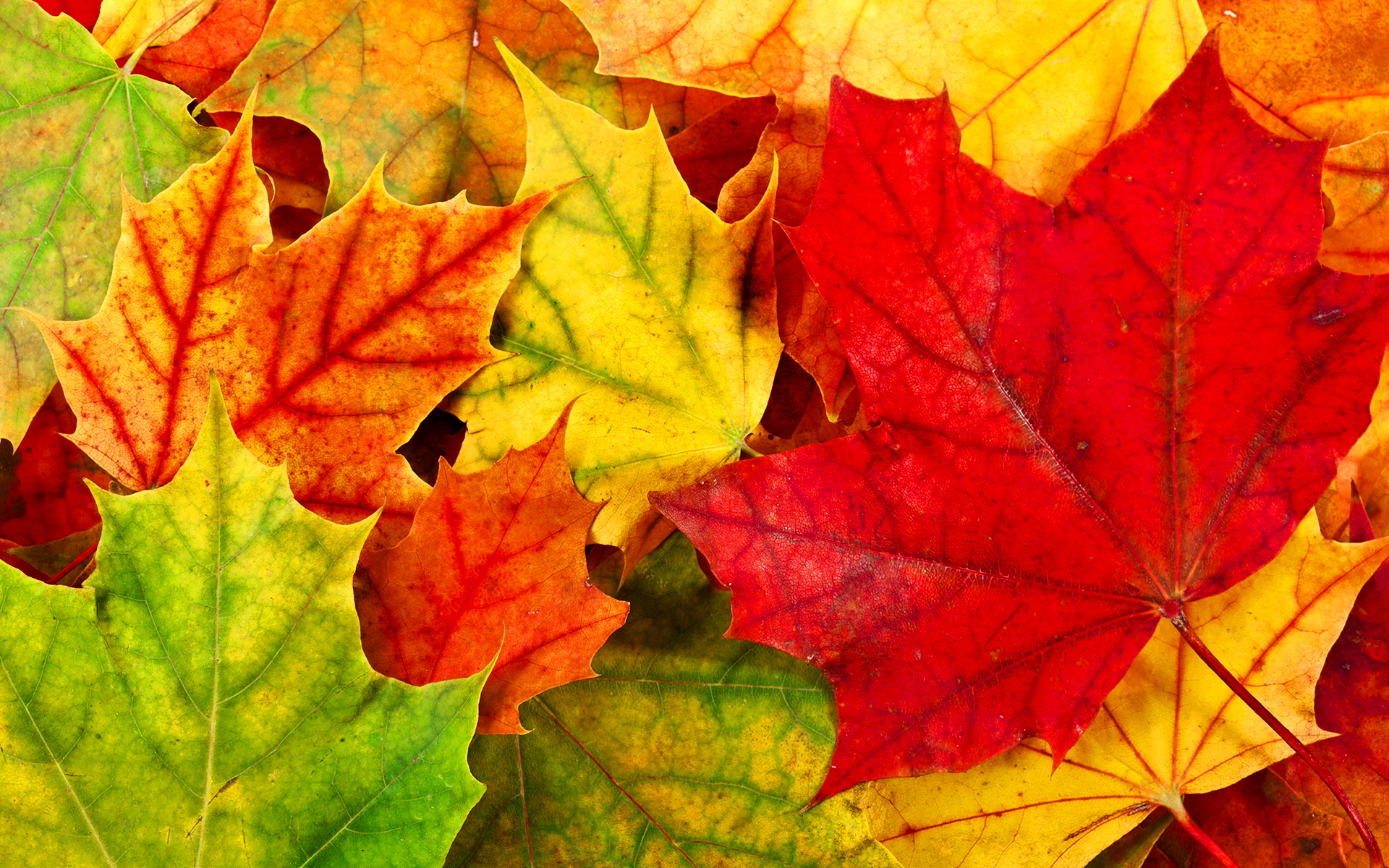 Autumn Leaves Desktop Wallpapers - Wallpaper, High ...