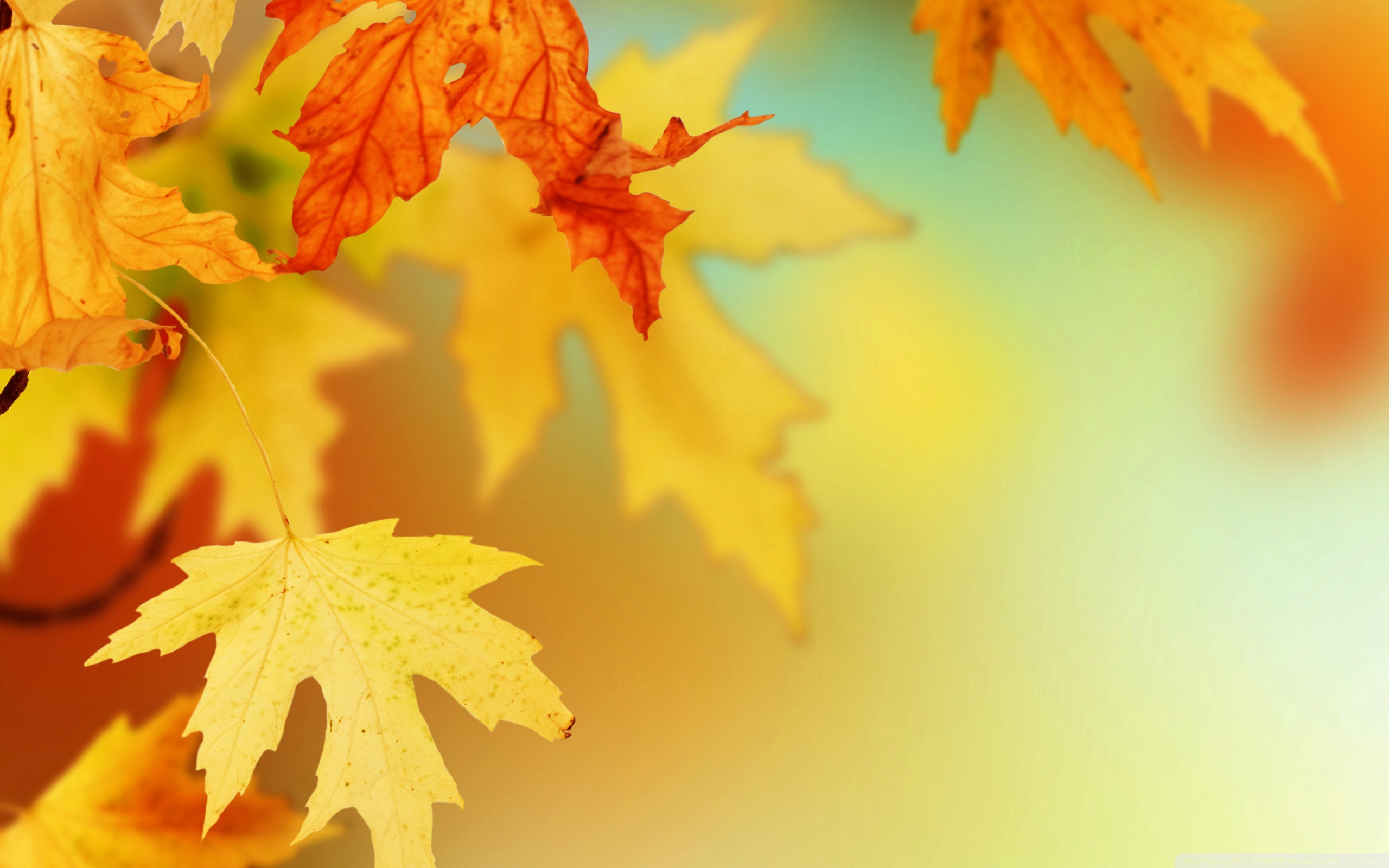 Autumn leaves photos wallpaper high definition high quality autumn leaves photos voltagebd Image collections