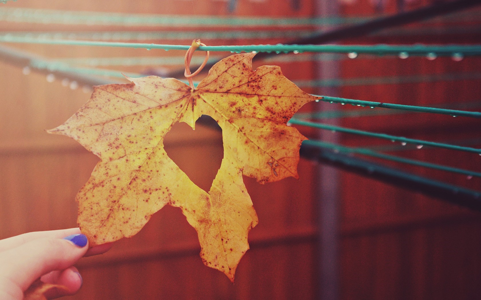 Leaf Cool Wallpapers - Wallpaper, High Definition, High ...