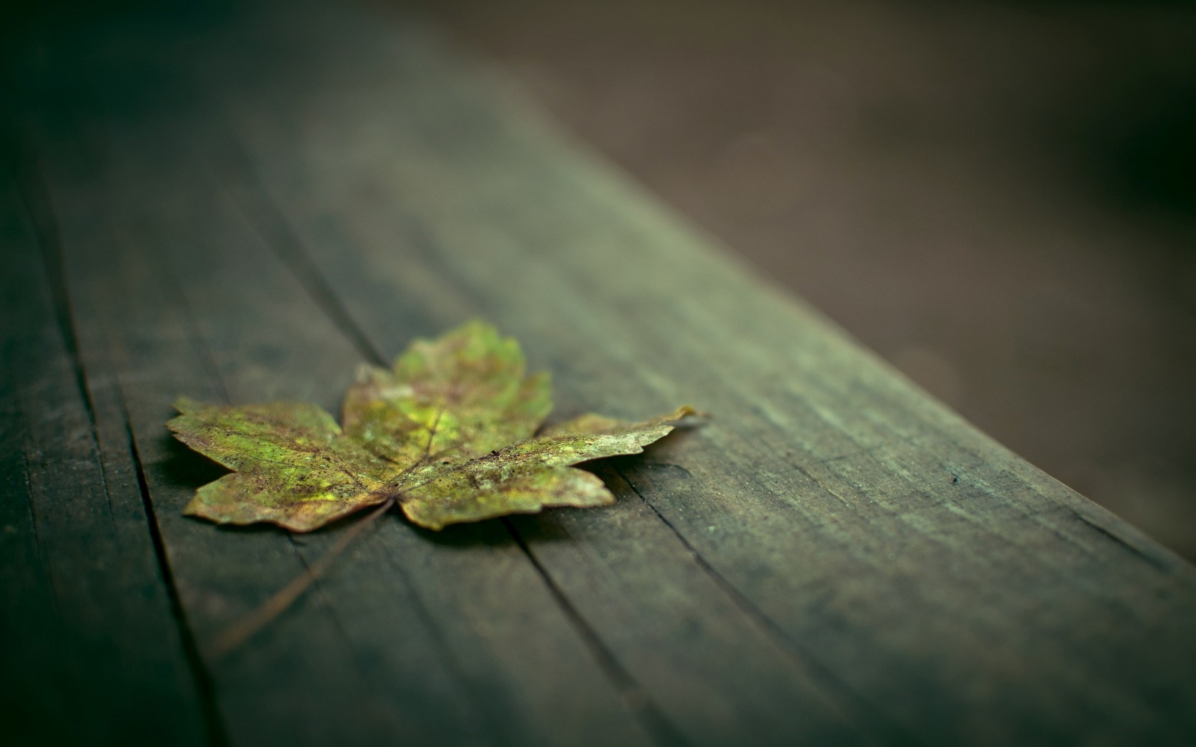 leaf background wallpaper - photo #31