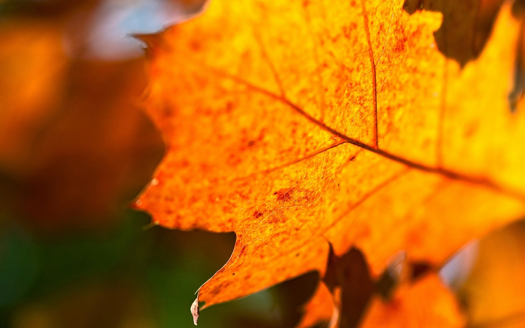 leaf background wallpaper - photo #36