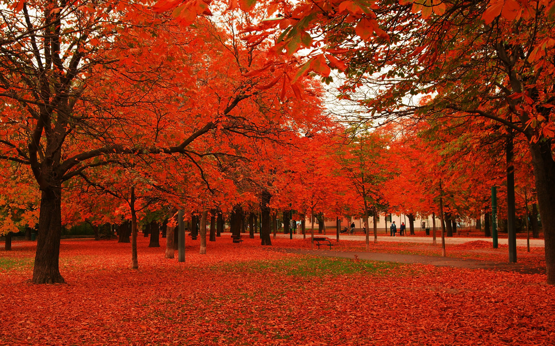 Labels Red Autumn Leaves Photography Hd Wallpapers For: Red Autumn Leaves Wallpapers