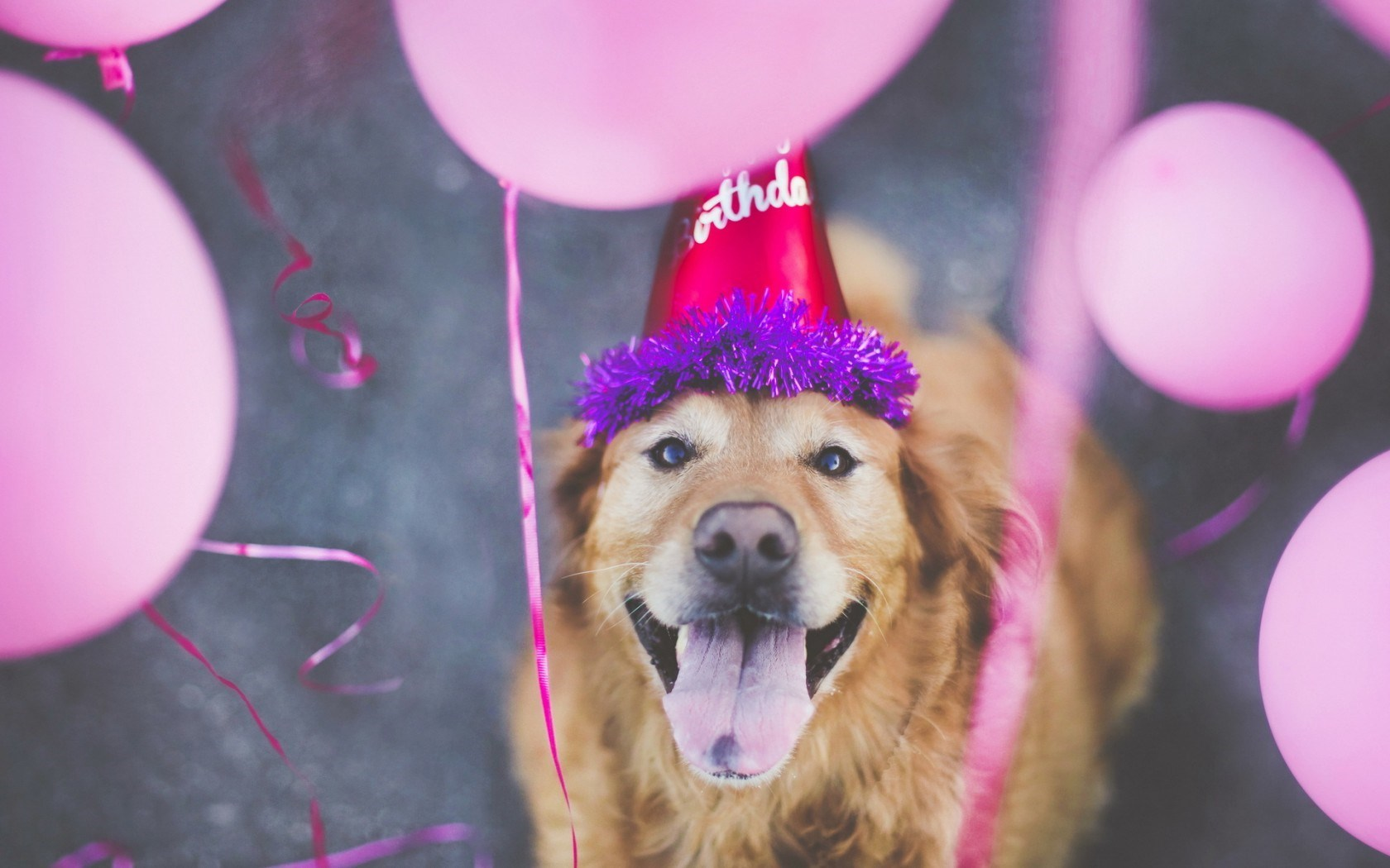 cute happy birthday dog pictures