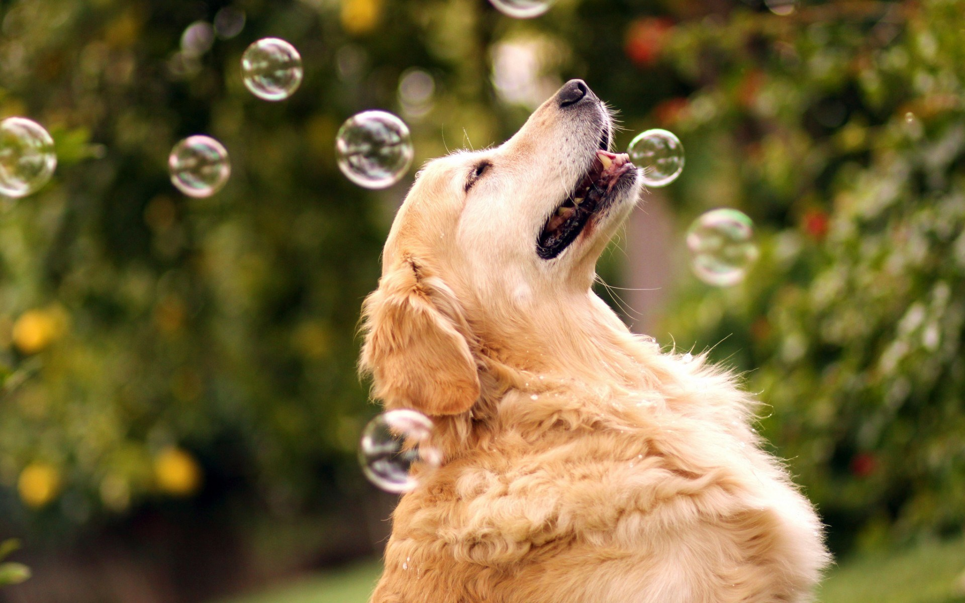 Dogs Background Wallpaper High Definition High Quality