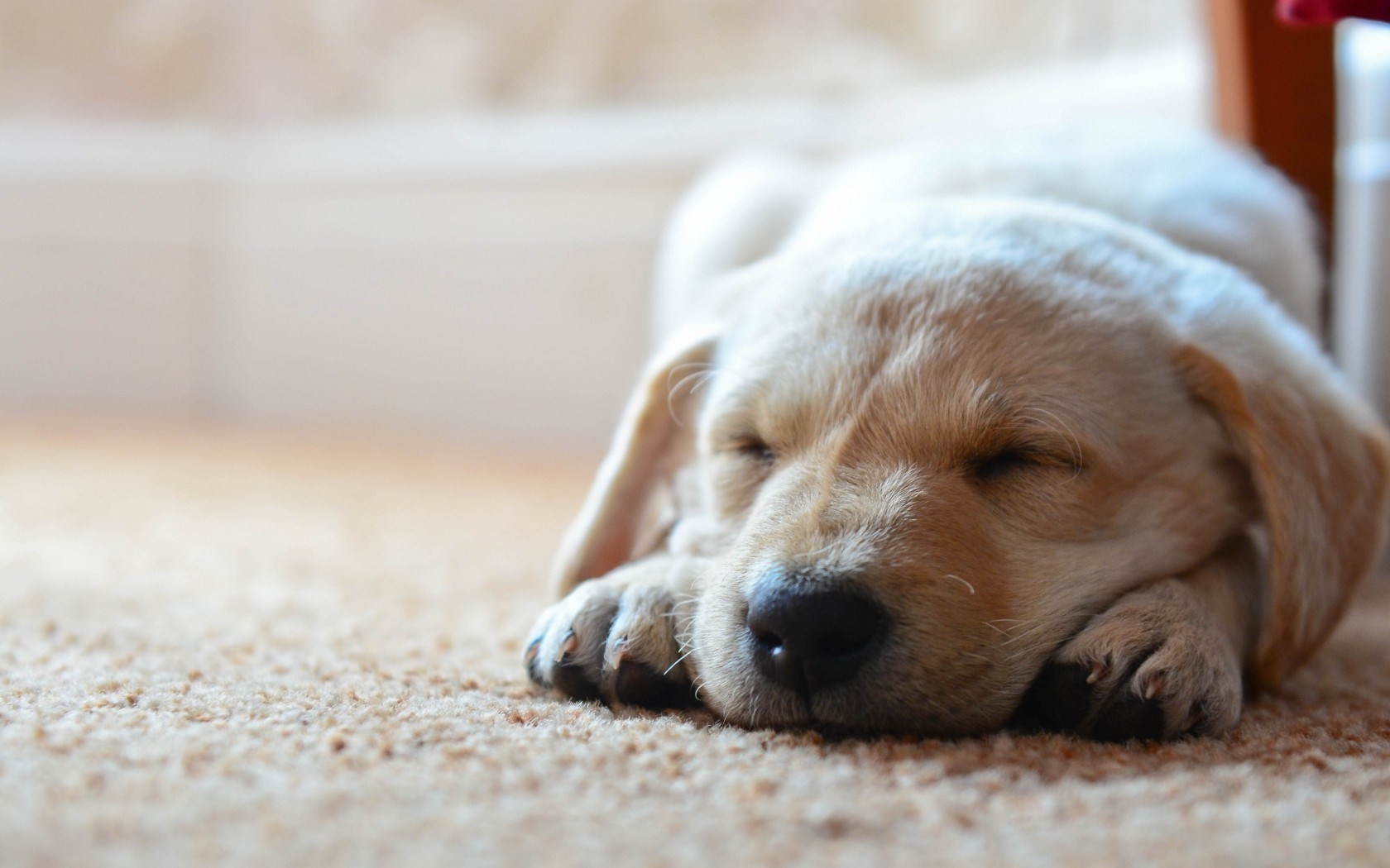 Dogs Sleeping Wallpaper High Definition High Quality