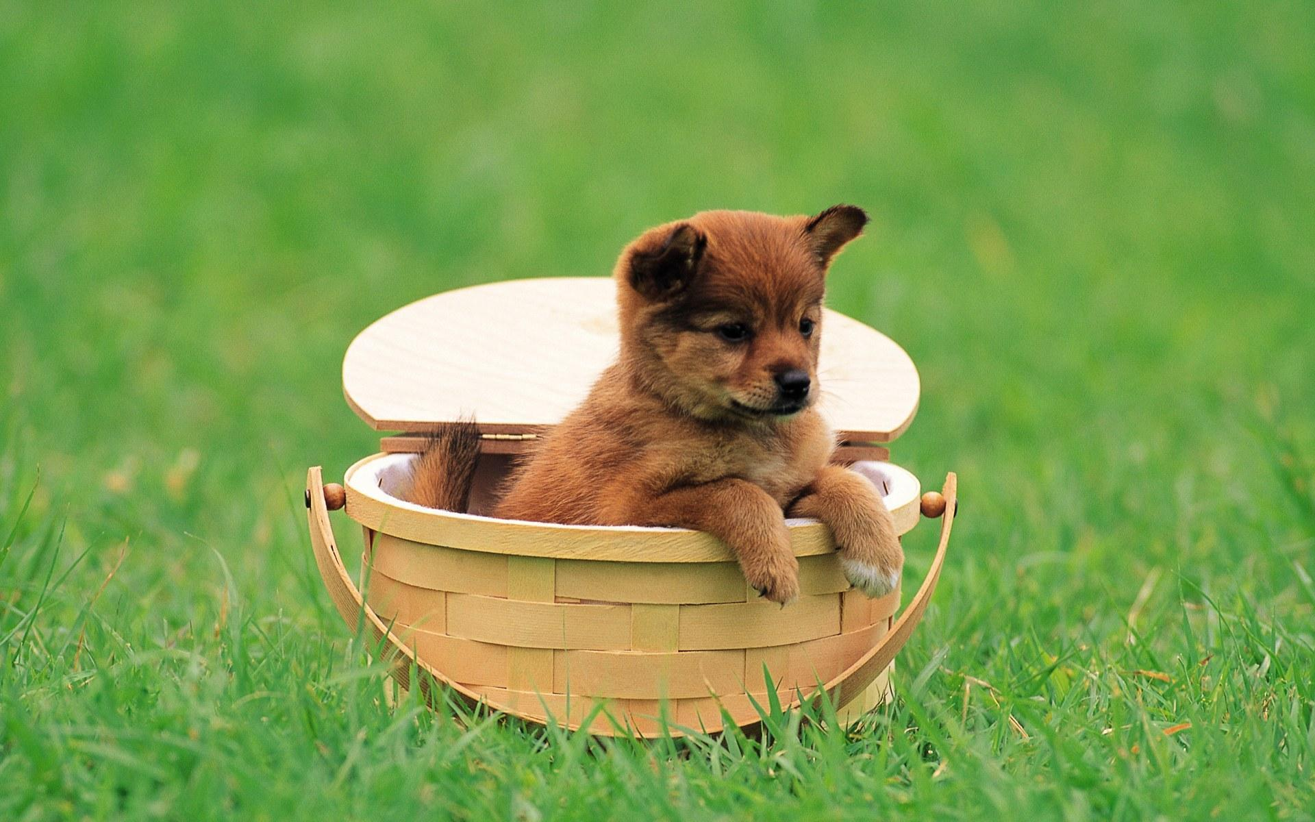 Puppies Cool Wallpaper Wallpaper High Definition High Quality