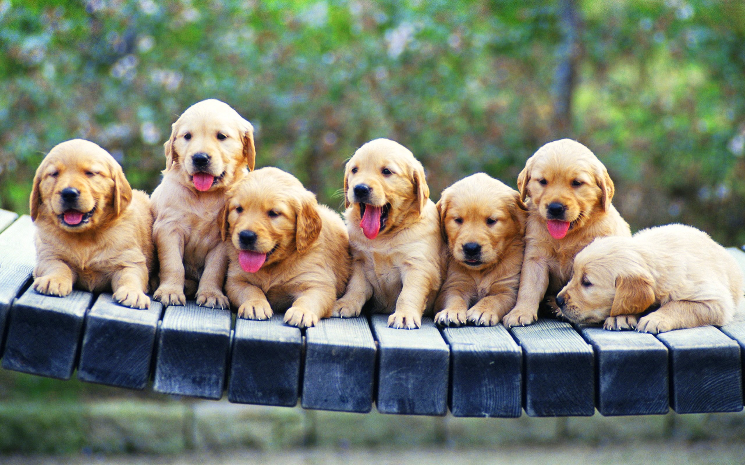 puppies free wallpaper - wallpaper, high definition, high quality