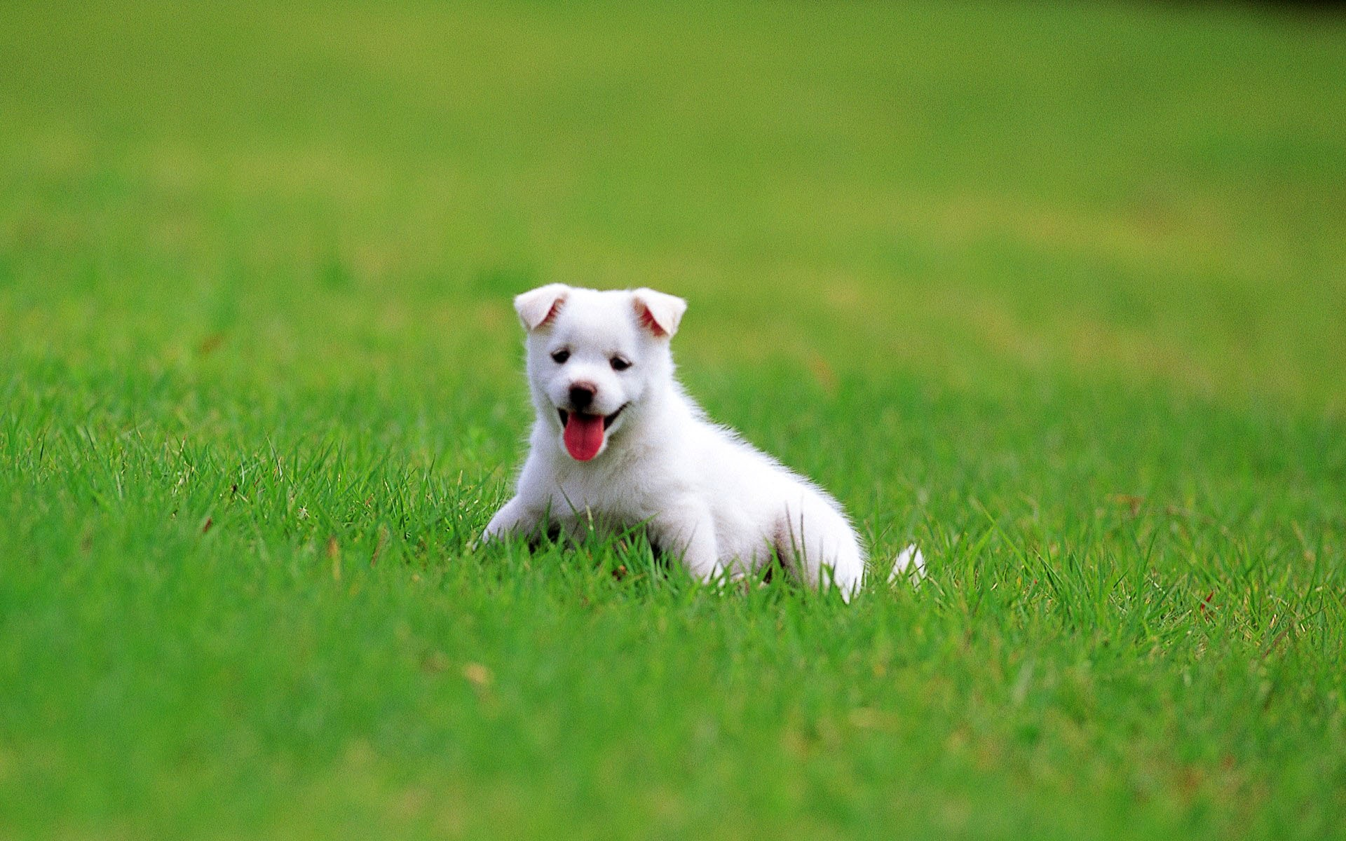 Puppy Backgrounds Wallpaper High Definition High Quality Widescreen
