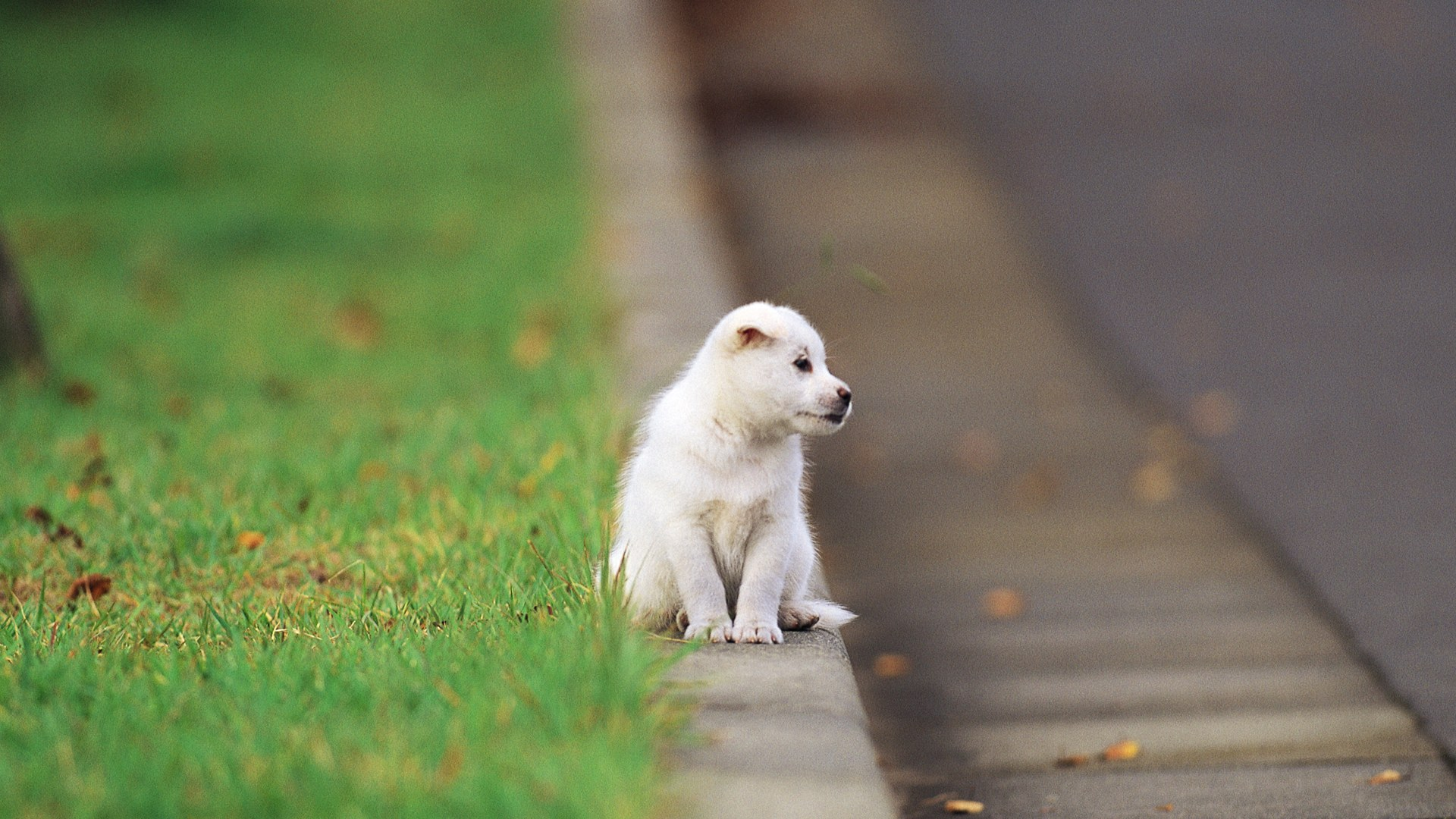 puppy free wallpaper - wallpaper, high definition, high quality