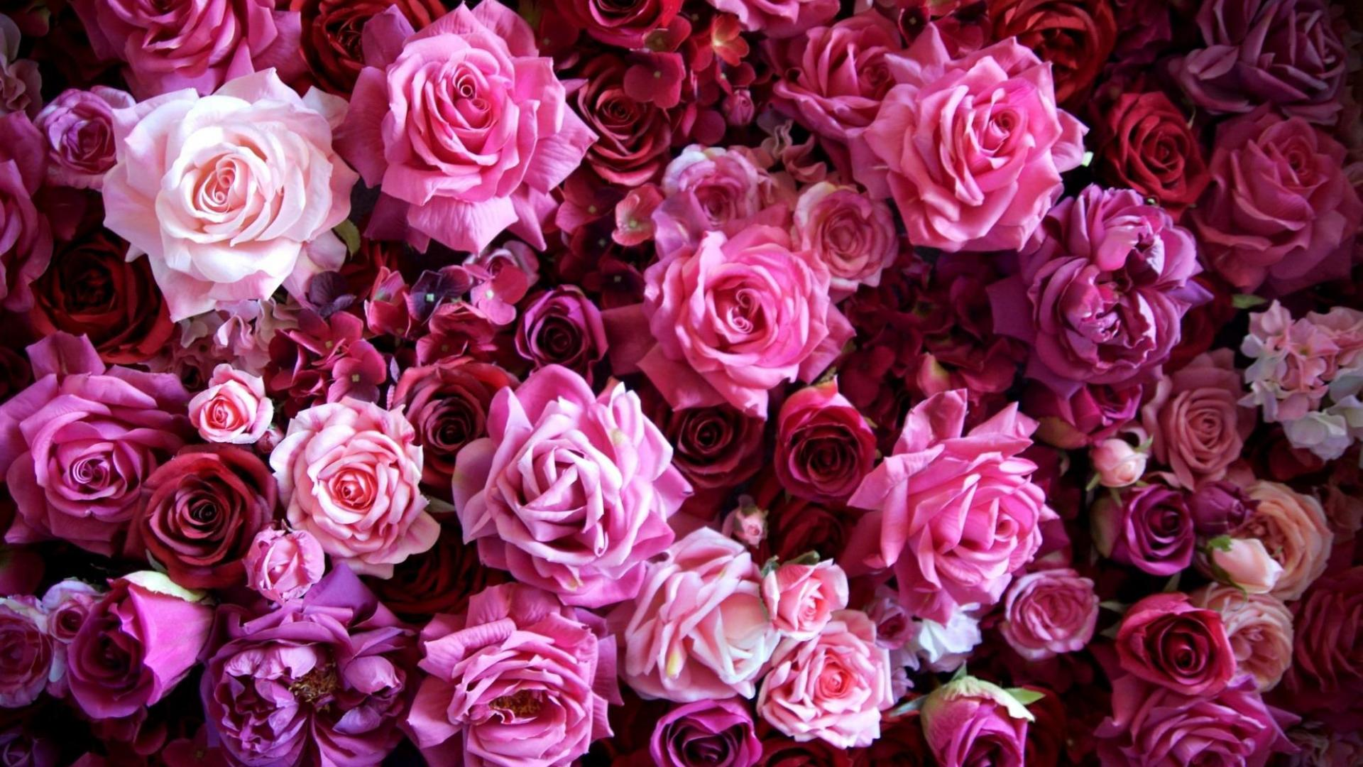 Beautiful Pink Roses Picture - Wallpaper, High Definition ...