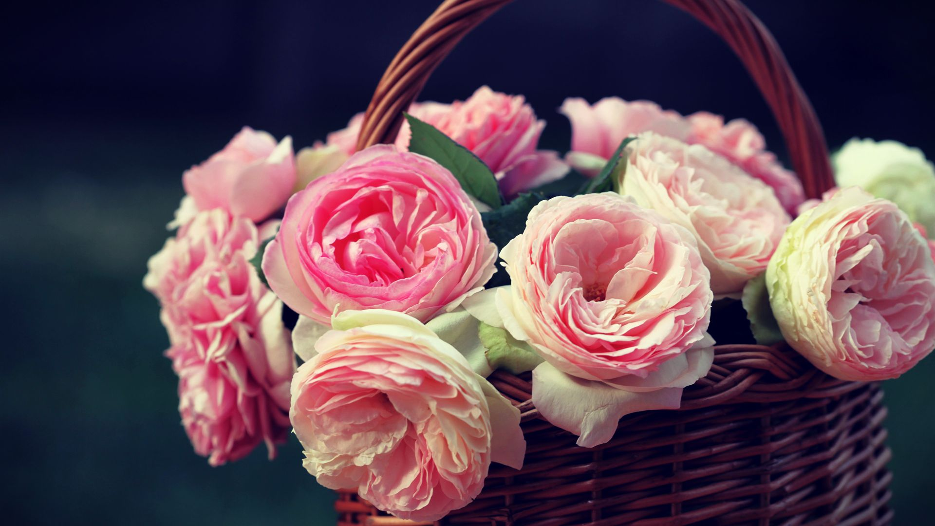beautiful roses - wallpaper, high definition, high quality, widescreen