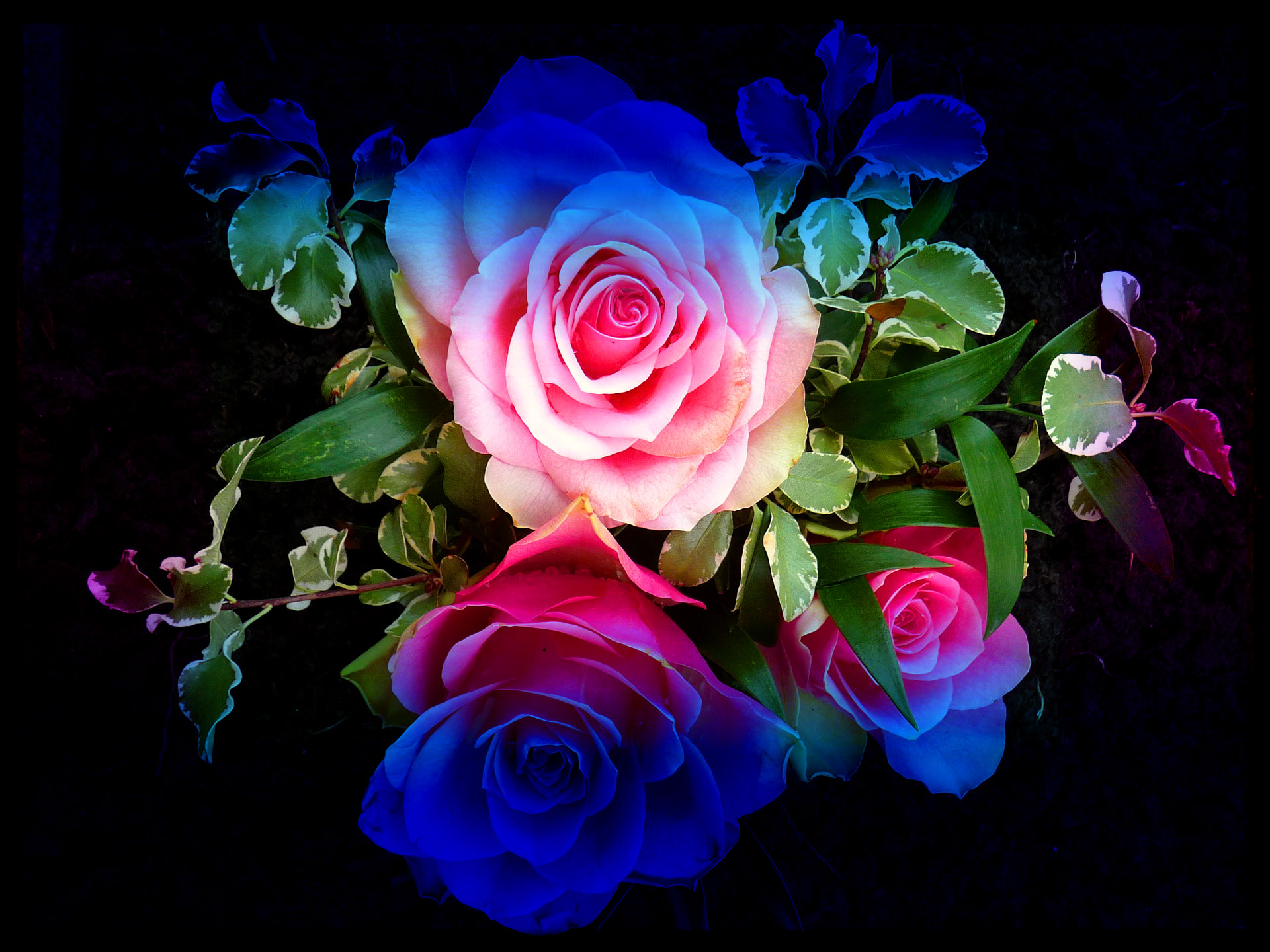 Image Gallery neon rainbow roses wallpaper