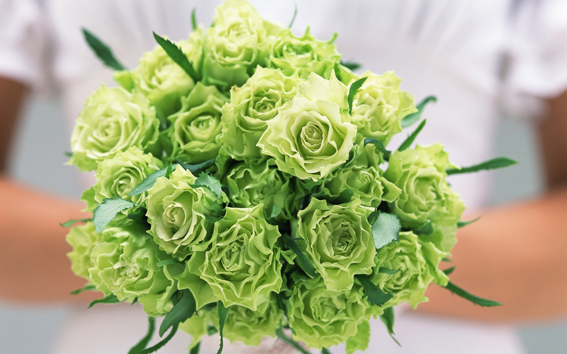 green roses wallpaper - wallpaper, high definition, high quality