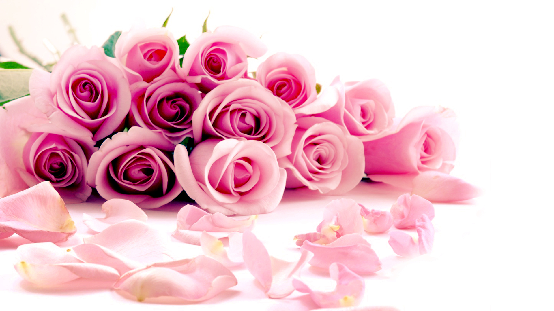 Pink Roses Wallpapers Wallpaper High Definition High Quality