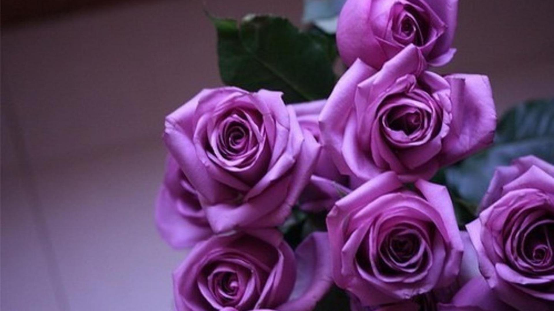 purple roses wallpaper high definition high quality