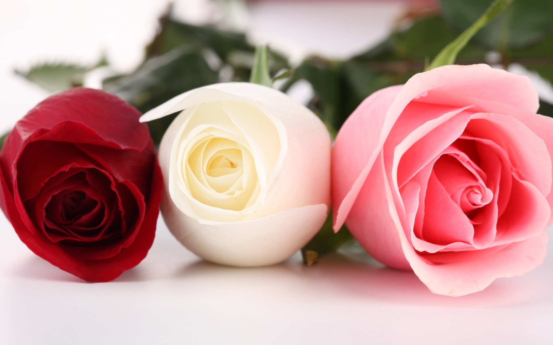 Roses photo wallpaper high definition high quality widescreen roses photo wallpaper roses photo mightylinksfo