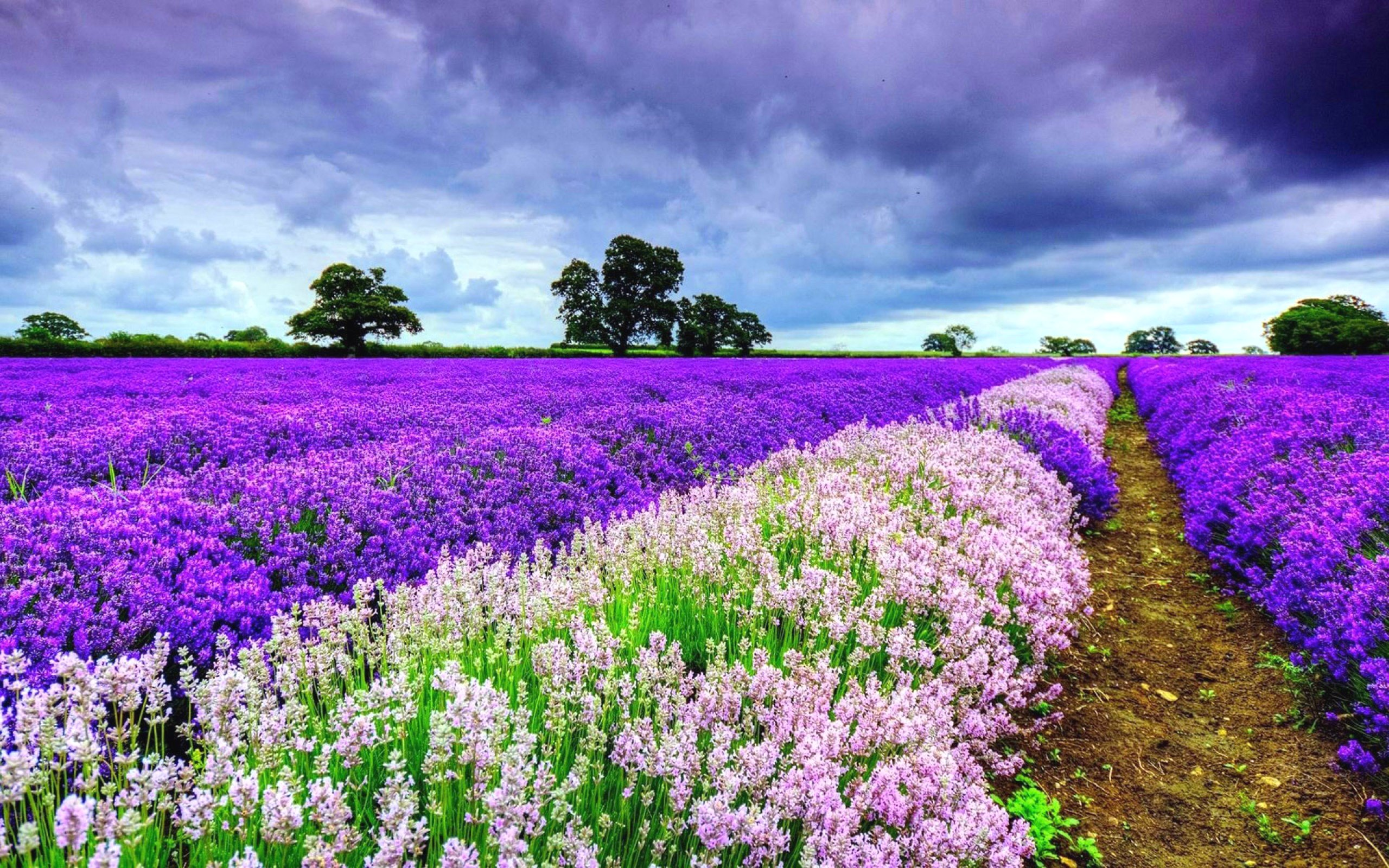 Beautiful Spring Pictures Mesmerizing With Purple Spring Flowers Images