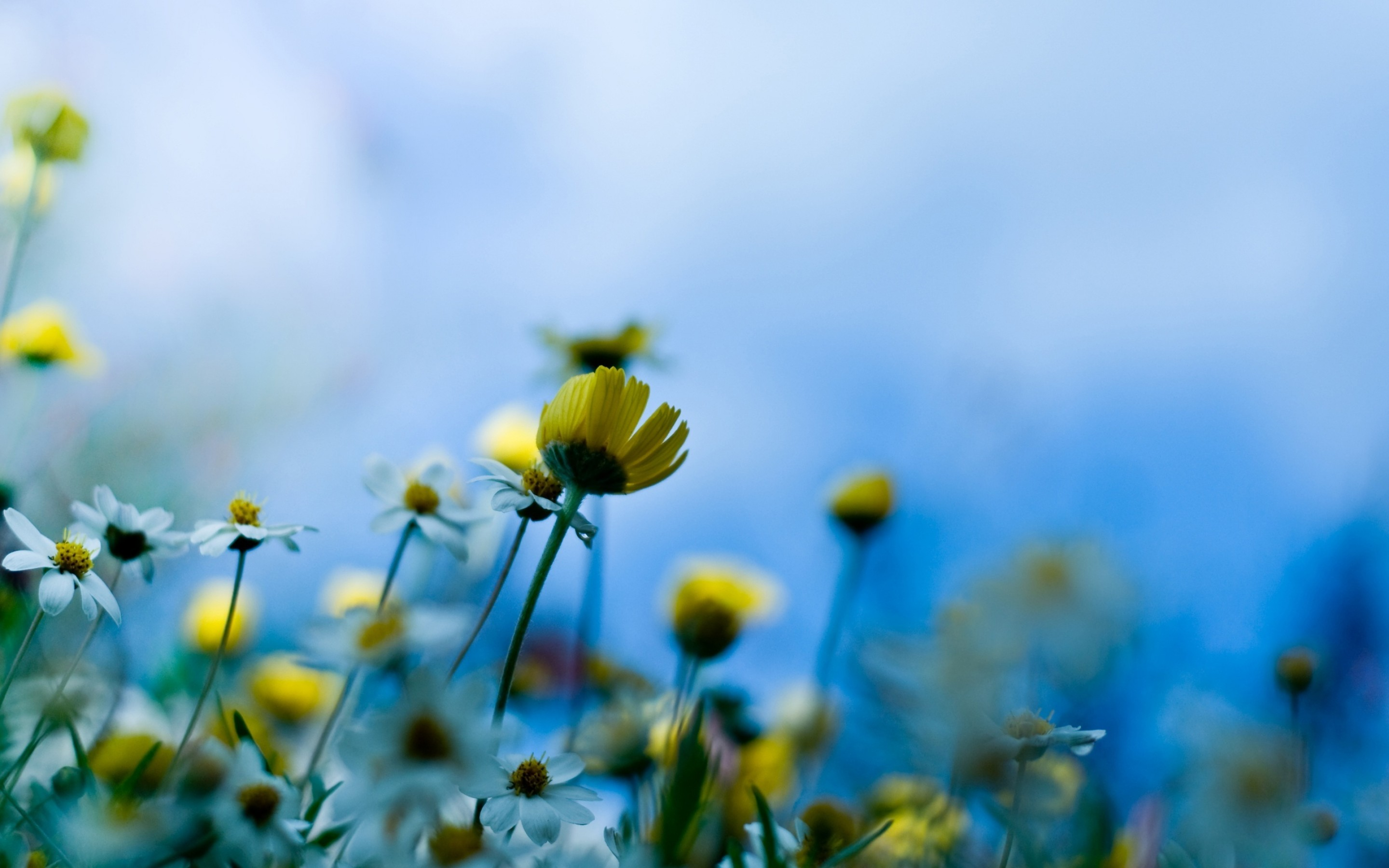 Best Spring Pictures - Wallpaper, High Definition, High ...
