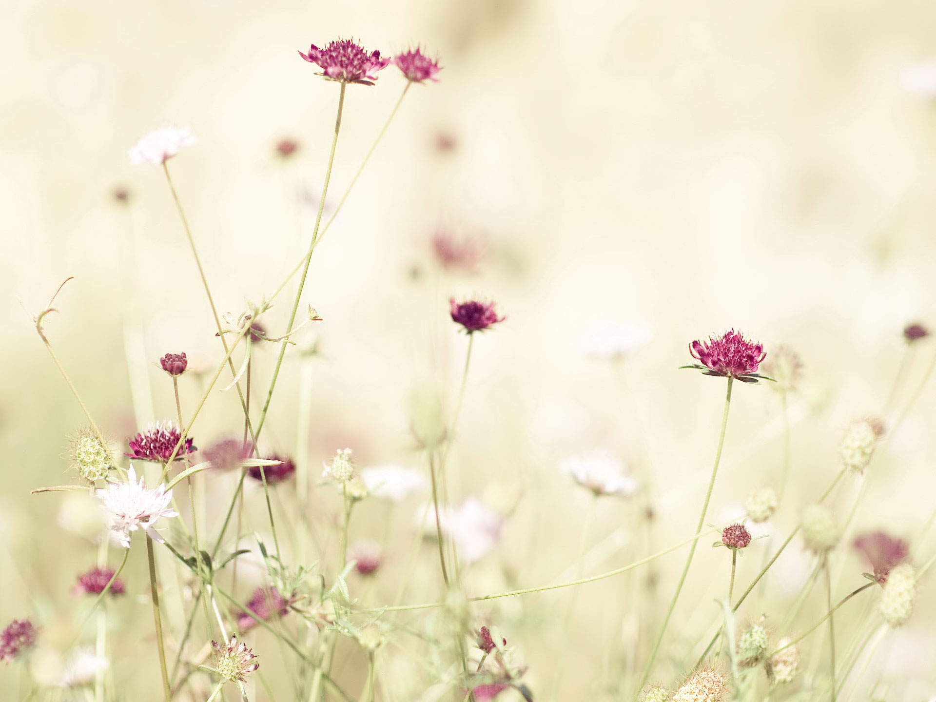 Spring Flowers Photos Wallpaper High Definition High Quality