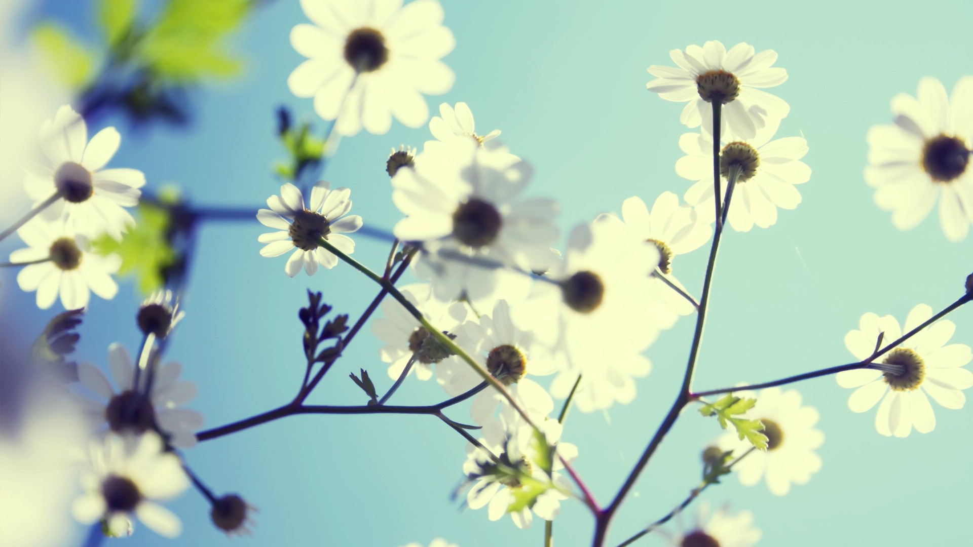 Popular Wallpaper High Quality Spring - spring-full-hd_122038784  Image_295434.jpg