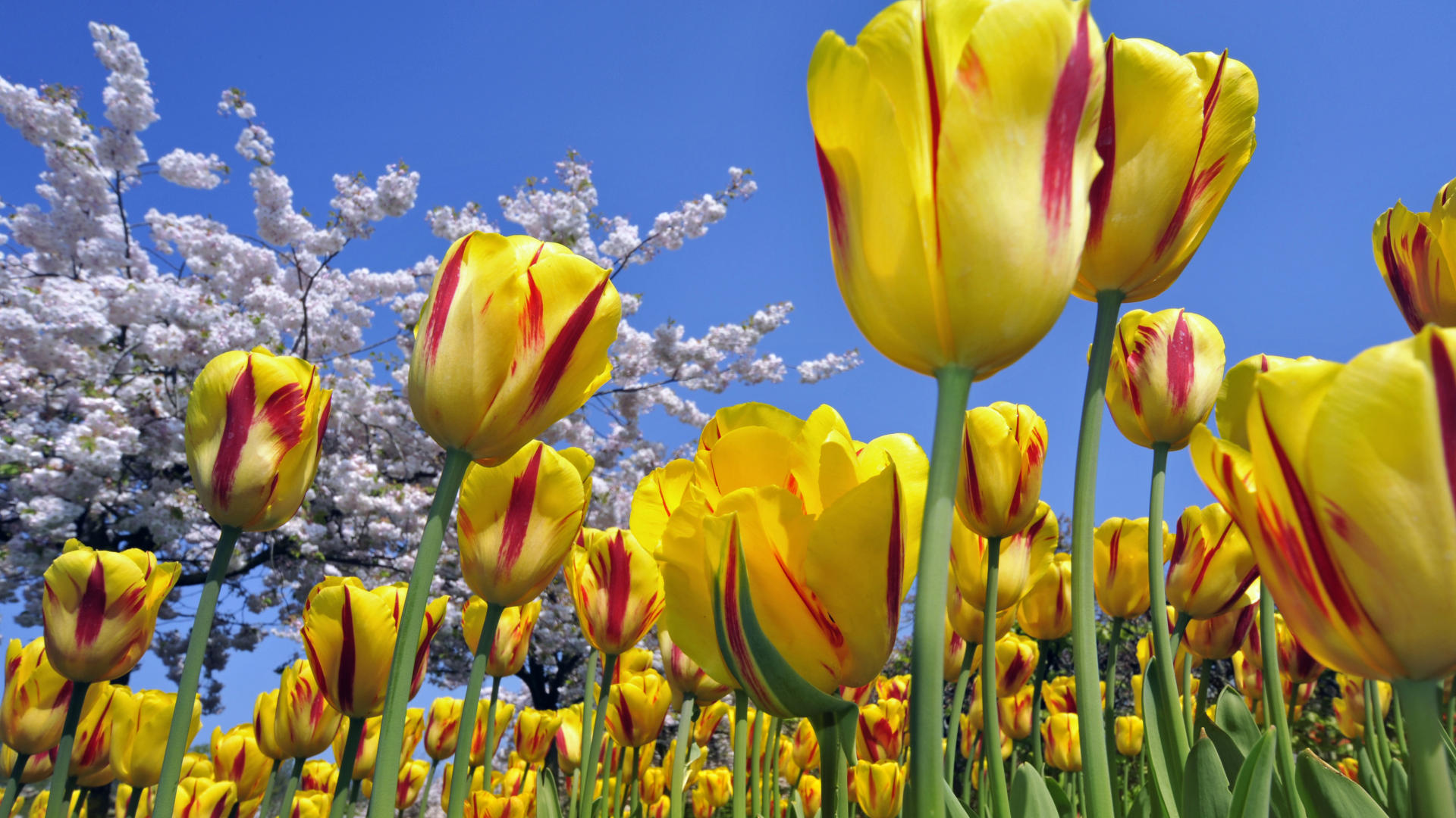 Spring Pictures - Wallpaper, High Definition, High Quality ...