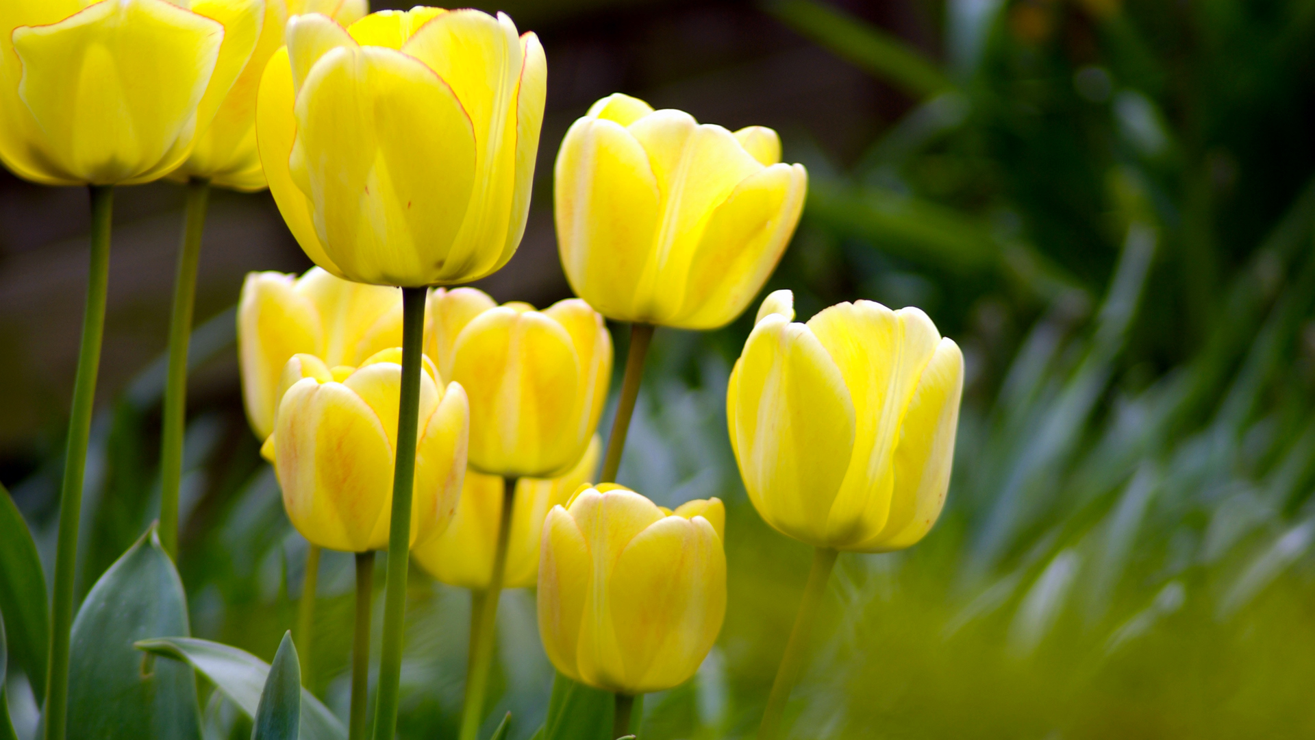 Spring Yellow Flowers - Wallpaper, High Definition, High ...