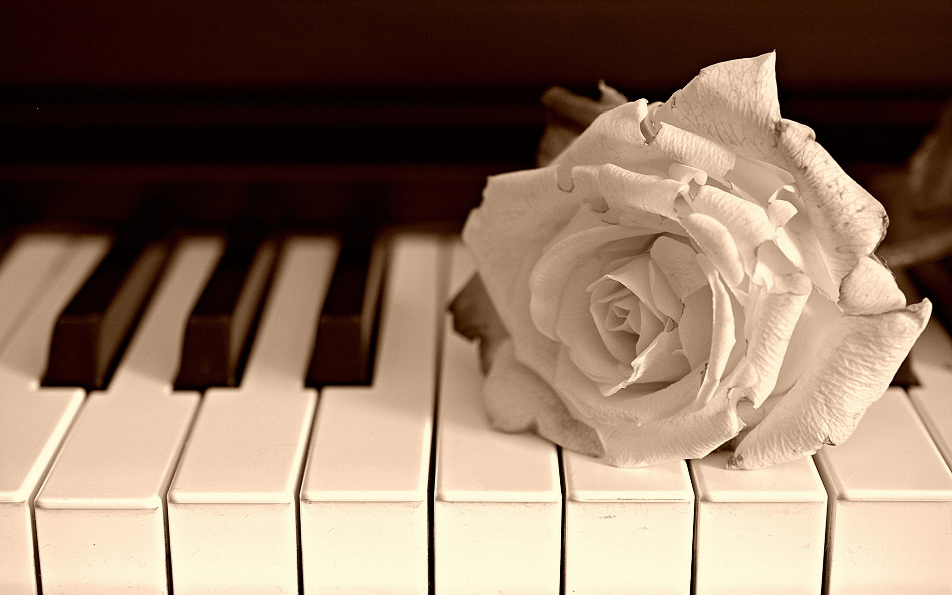 Piano Music Wallpaper: Wallpaper, High Definition, High