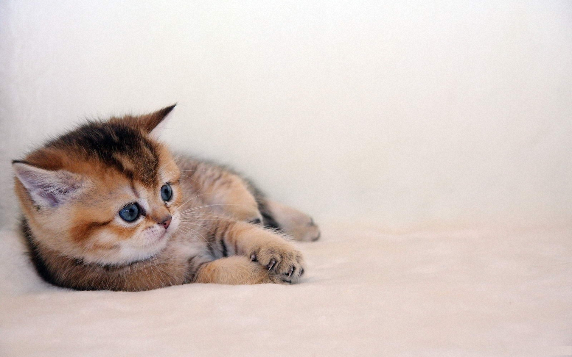Kitten Background  Wallpaper High Definition