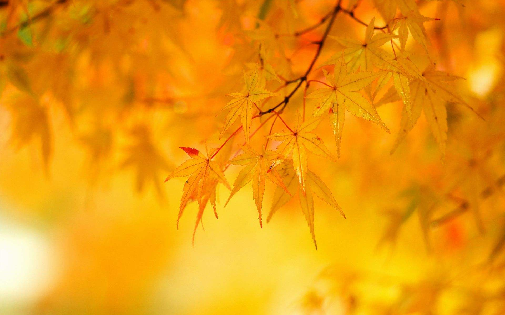 Yellow Background Wallpaper High Definition High Quality