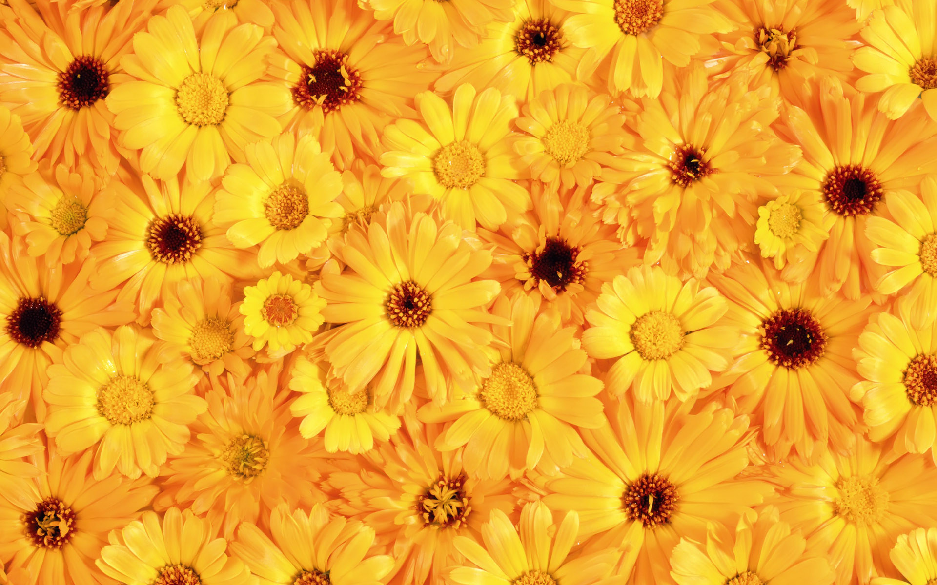 Yellow Color Wallpaper - Wallpaper, High Definition, High Quality ...