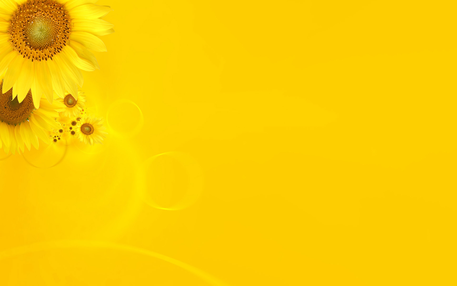 yellow flower backgrounds - photo #12