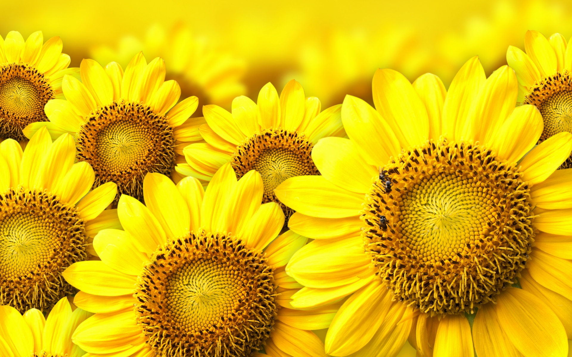 Beautiful Wallpaper High Resolution Flower - yellow-flowers_09301399  Perfect Image Reference_58212.jpg