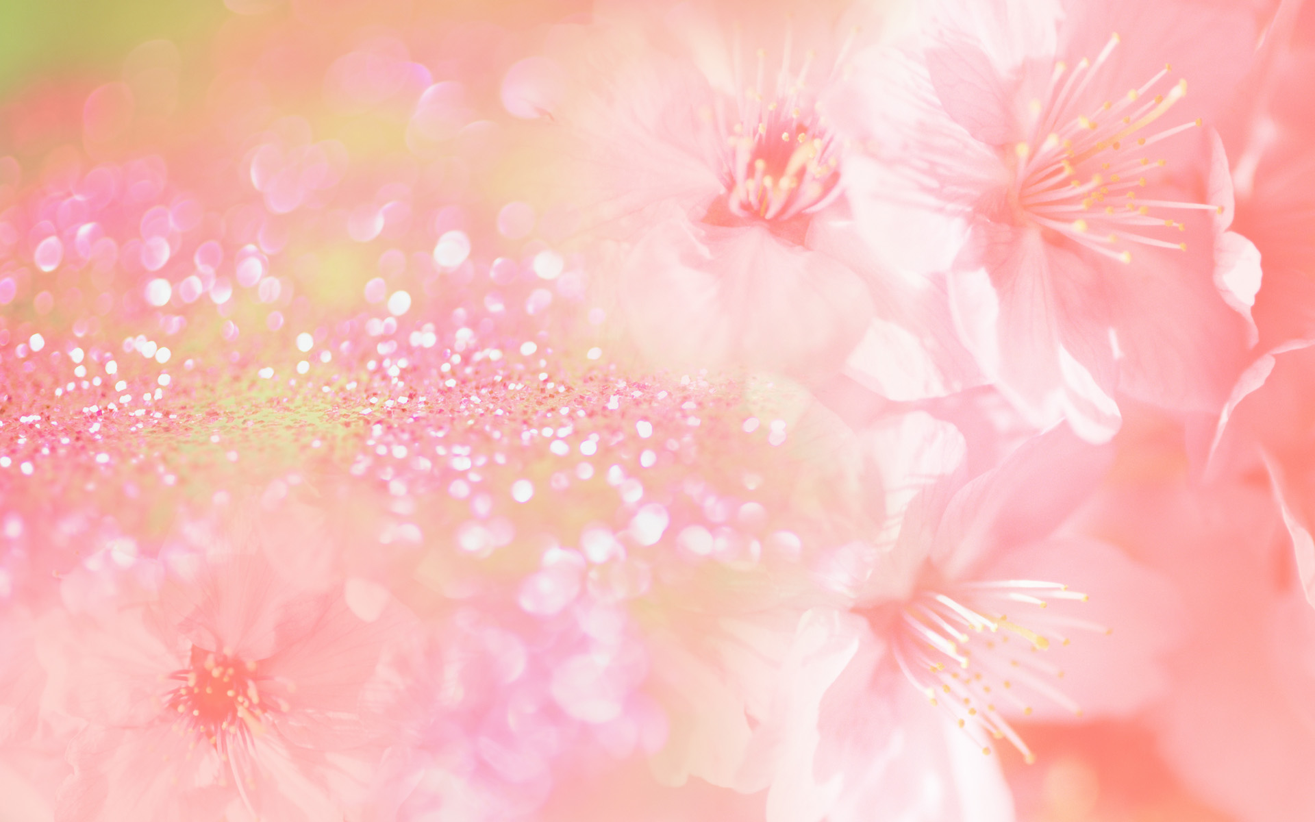 Pink Color Wide Wallpaper Wallpaper High Definition High Quality