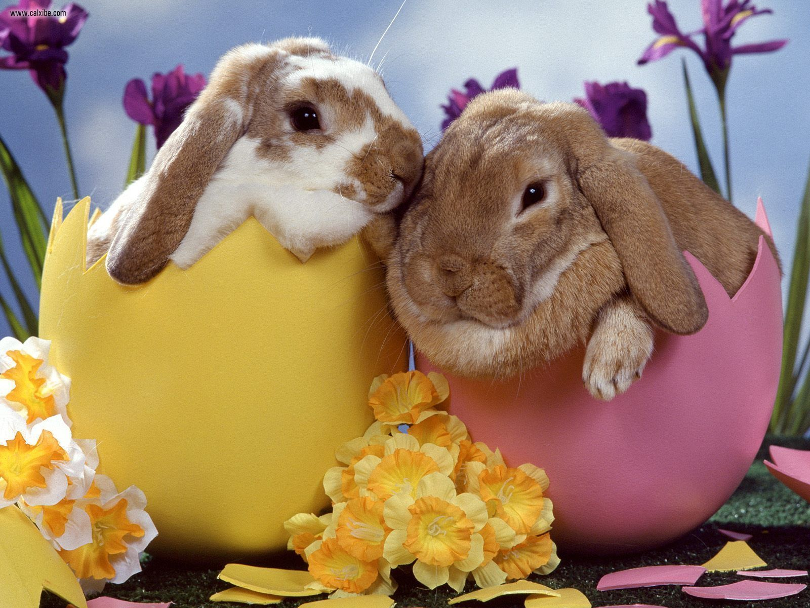Easter Bunny Wallpaper High Definition High Quality Widescreen