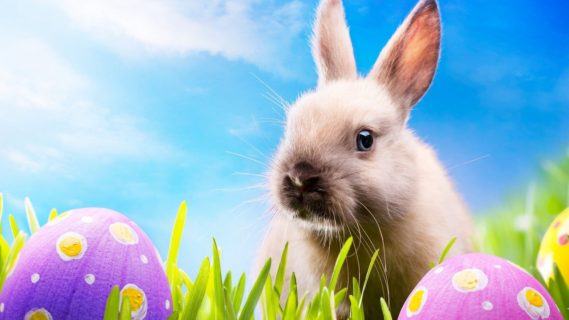 easter wallpapers hd - photo #8