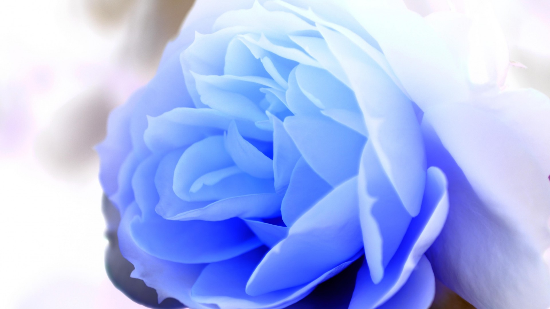 pics photos baby blue wallpaper wallpapers co