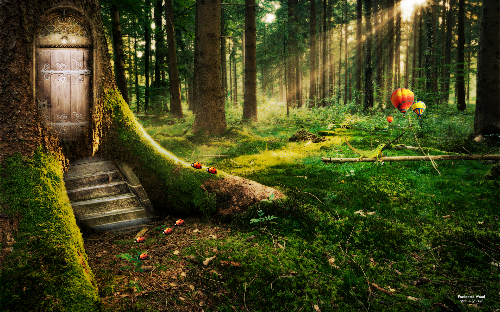 Enchanted Forest Wallpaper High Definition High