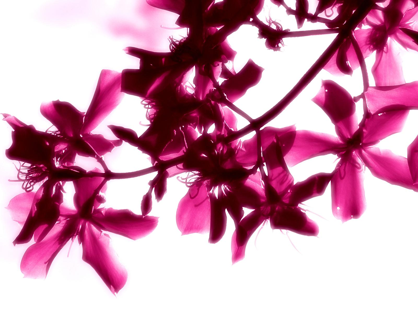 Beautiful Bright Flowers Wallpaper High Definition High Quality